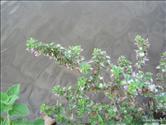 foto23301