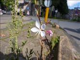 foto33009