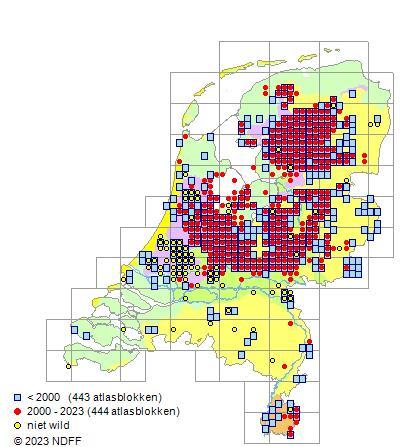 Kaart ringslang. Bron: Verspreidingsatlas.nl